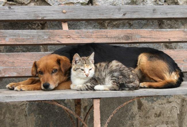 disminucion de perros y gatos callejeros; como disminuir la poblacion de perros y gatos callejeros, como disminuir la poblacion animal callejera, toks, uvm, hospital veterinario uvm, esterilizacion de perros y gatos, esterilizacion de perros callejeros, esterilizacion de gatos callejeros, campana de esterilizacion