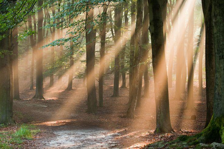 De Hoge Veluwe, Netherlands. #greetingsfromnl