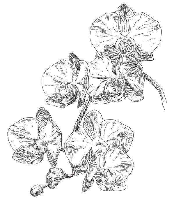 Ruční kresba orchidej