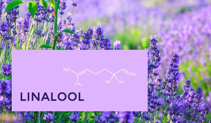 Cannabis Terpenes Linalool
