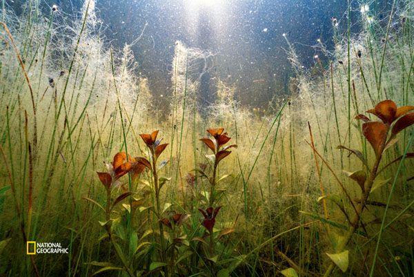 米国ノースカロライナ州ハタラス島のケープポイント・キャンプ場が冠水し、水中で藻類が繁茂している。2016年の春に島を含むケープハタラス国立海岸区域を襲った熱帯低気圧の影響で、4日間にわたって雨が降り続き