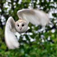 This entire page is filled with lovely Barn Owl pictures. #owls