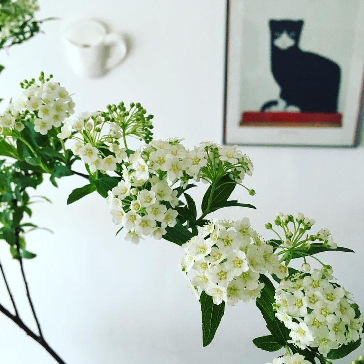 小手毬。 テーブルに飾るのもいいけど 壁に飾るのもかっこいいかも。 枝垂れ方がなんとも言えない 好きな花。  #decco #首里駅 #ceramics #地力 #ちりき #cup #壁掛け花器 #早口言葉 #okinawa