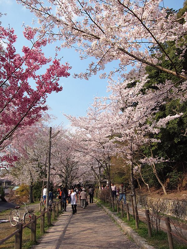 Philosopher's Walk, Kyoto 2014