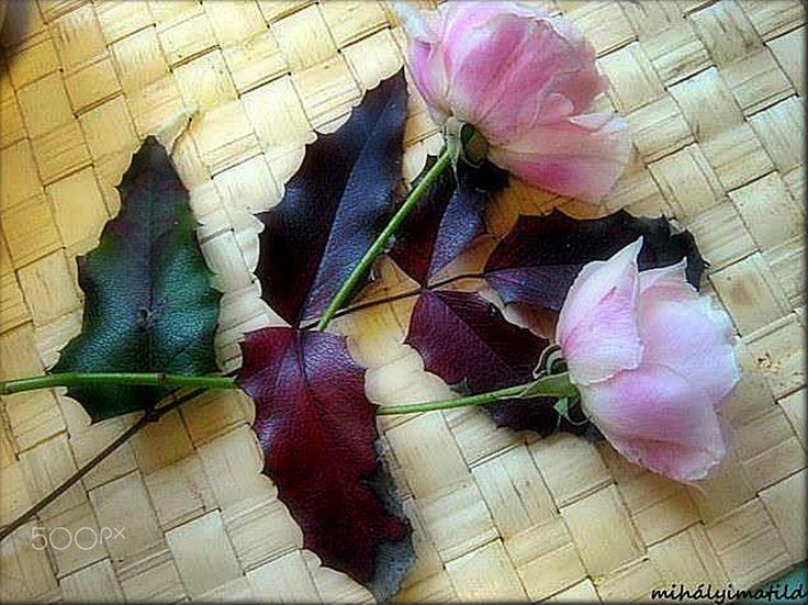 rose love - null