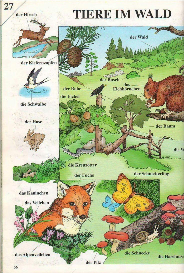 Tiere I'm Wald