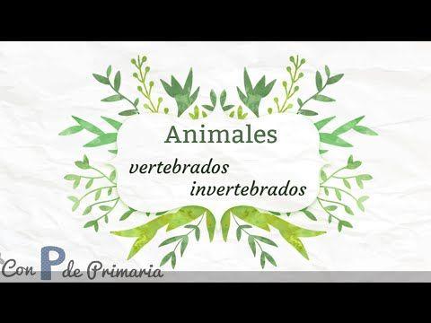 Recursos: Animales vertebrados e invertebrados