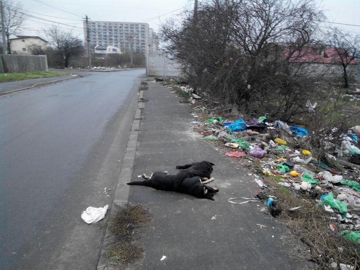 atrocitati tribale savarsite de rromi -  2014 - sector 3 - bucuresti - romania