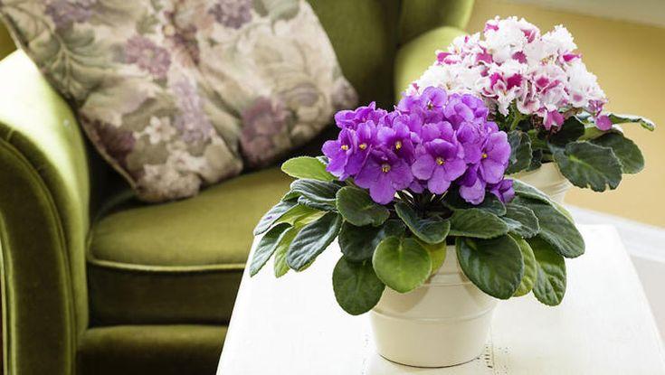 25 best ideas about low light plants on pinterest low. Black Bedroom Furniture Sets. Home Design Ideas