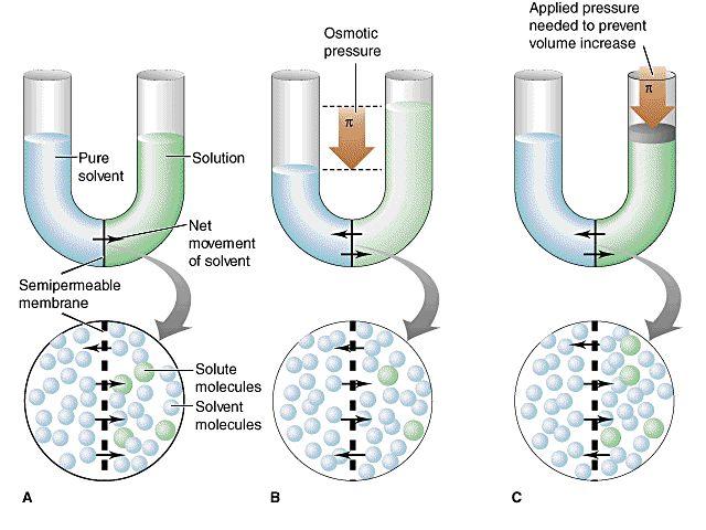 Primera sesión de repaso de PAU: seleccionando imágenes - Bioquímica - Agua y Sales Minerales - Conceptos de presión osmótica y HOMEOSTASIS. Osmotic pressure; Osmotic Shock