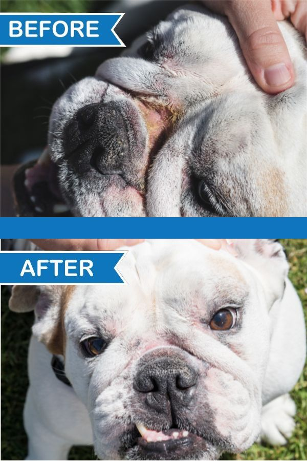 Antibacerial Antifungal Wrinkle Paste Cleans And Protects Dog
