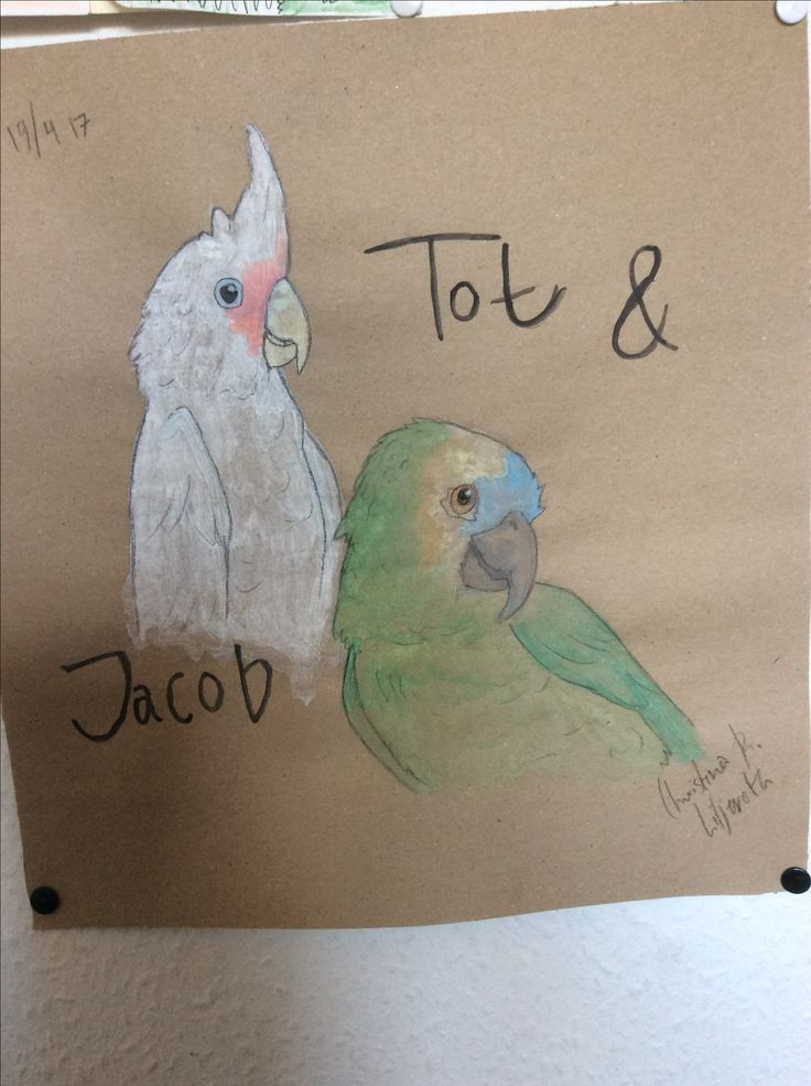 My parrot Jacob and his friend; drawing by ArtWolf