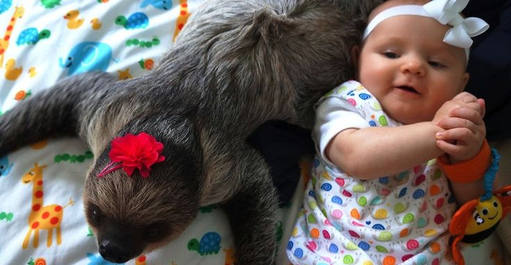 Adorable 5-Month-Old Baby And A Sloth Are Inseparable BFFs