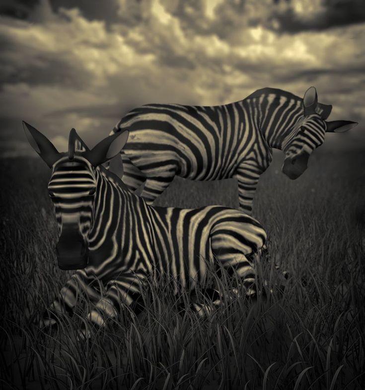 Zebras by Vítězslav Koneval