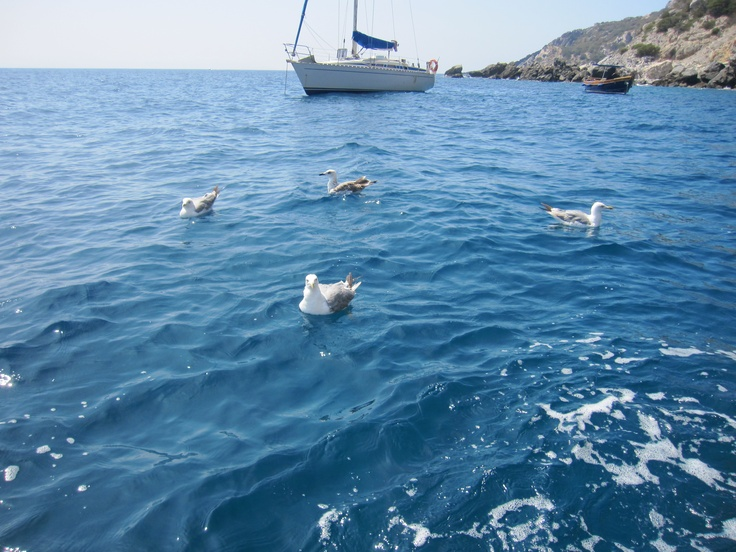 Seagulls on the sea of #maremma, #tuscany, #italy