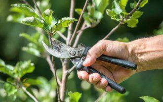 Эти растения отпугивают комаров не хуже, чем химические репелленты!