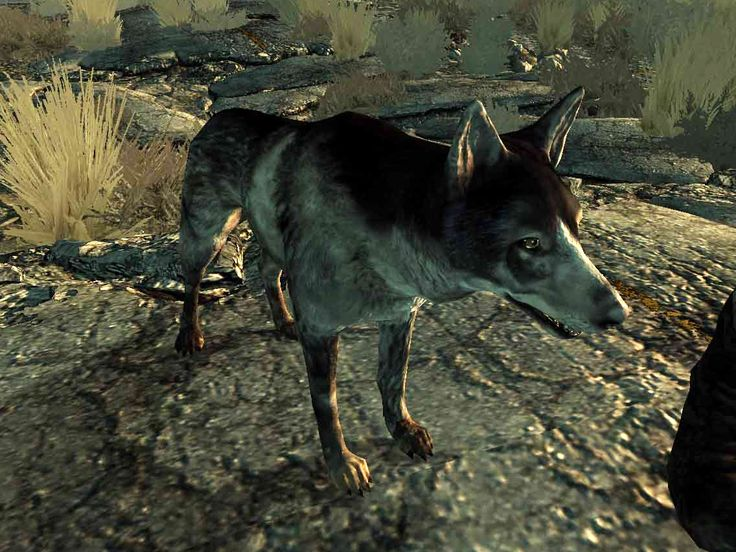 Dogmeat (Fallout 3) // dogmeat is missing in my game and I can't get him back even with the console :(
