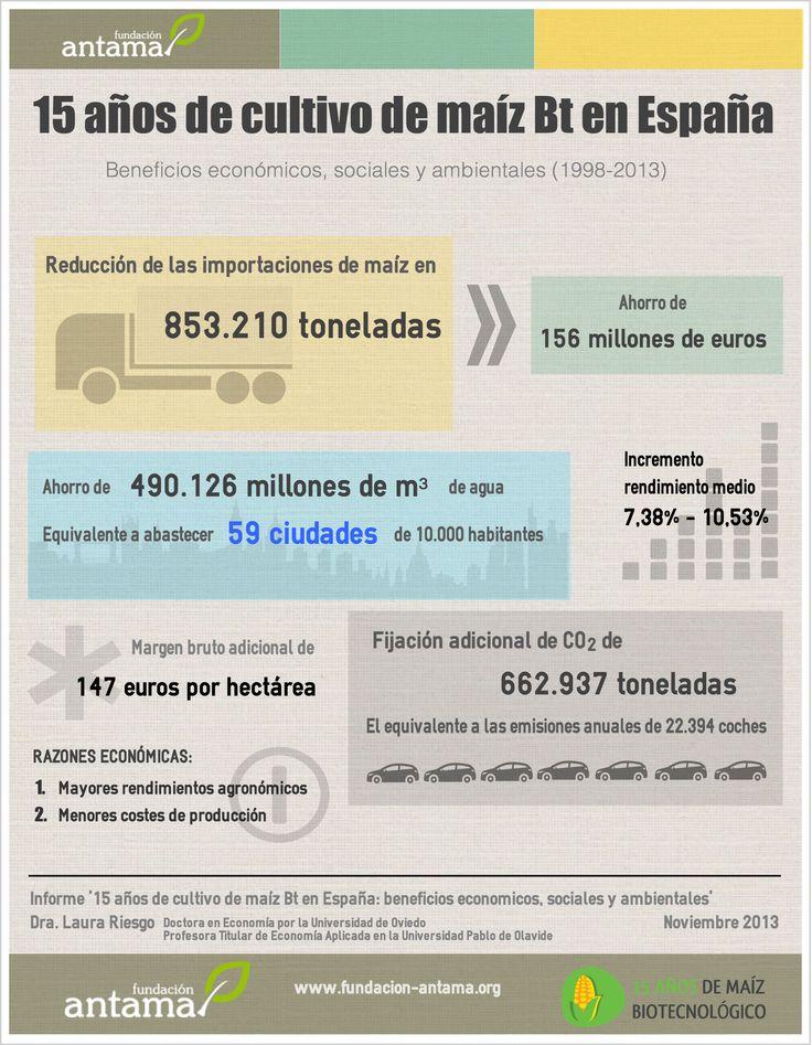 15 AÑOS DE CULTIVO DE MAÍZ TRANSGÉNICO Bt EN ESPAÑA: BENEFICIOS ECONÓMICOS, SOCIALES Y AMBIENTALES  [Infografía en tamaño completo: http://goo.gl/NdE2su] [Resumen - Dra. Laura Riesgo]