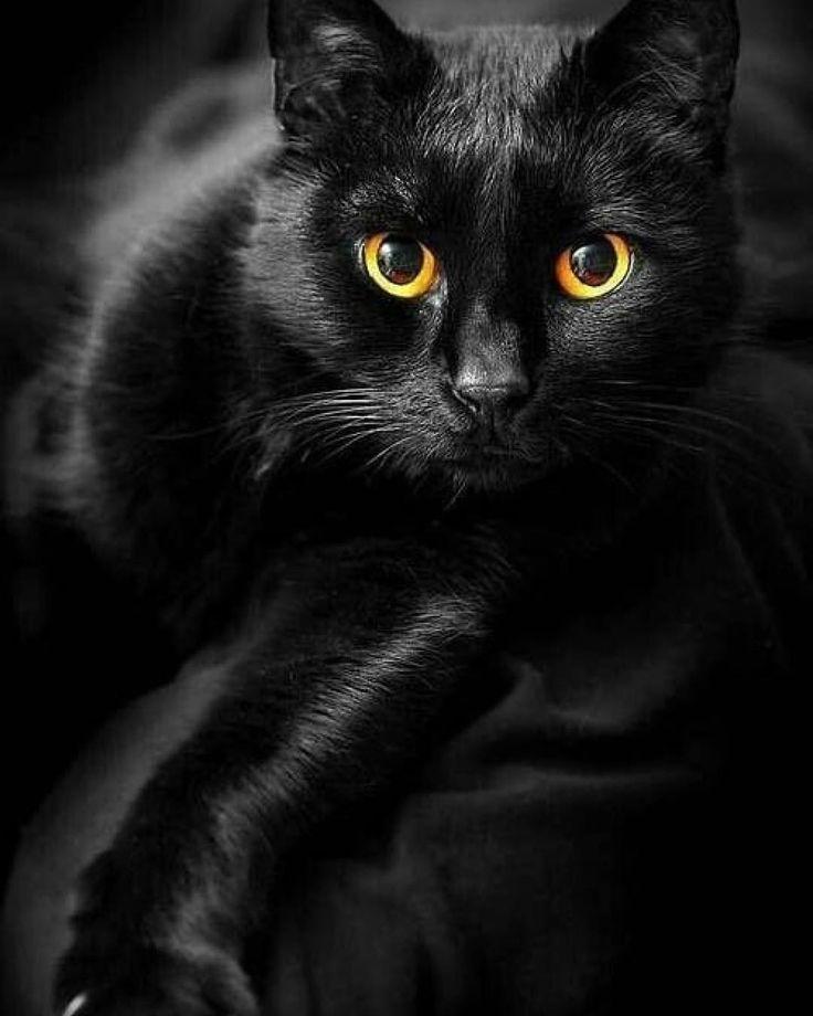 картинка чорного кота при получении продаем