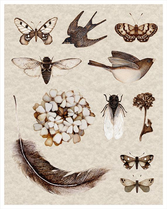 nature collection art print sepia cicada botanical bird insects feathers collective on Etsy, $22.00