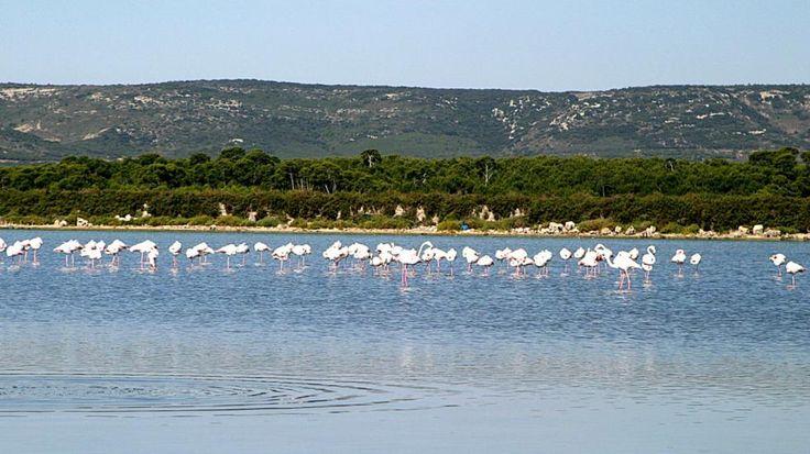 Roze flamingo's bij Étang d'Ingril