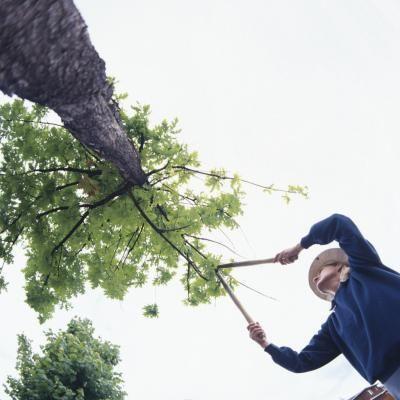 Boring beetles cause extensive damage to weakened trees.  Black beetles leaving holes in trees are probably bark beetles or flathead borers.