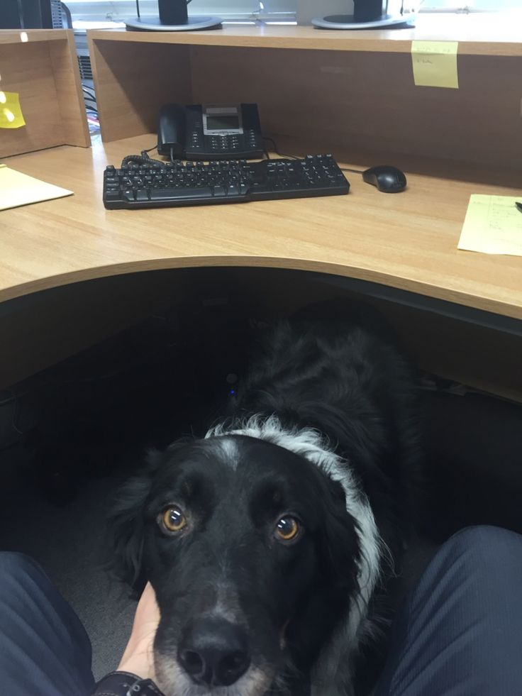The office dog makes it hard to concentrate at work