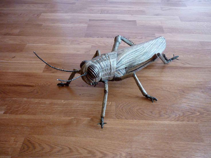 """Cavalletta – """"Anacridium aegyptium"""" (locust)"""
