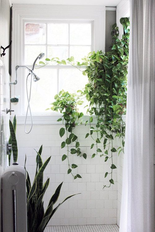 Love the idea of decorating the bathroom with plants againt the white wall...