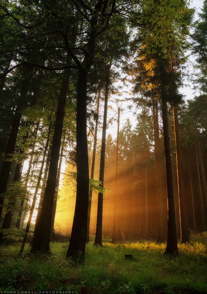 ~~light explosion | sunrise forest glow, Nieheim, Germany | by Timo Tomkel~~