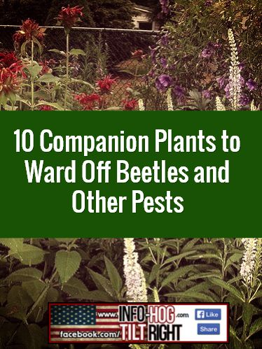 how to keep beetles off plants