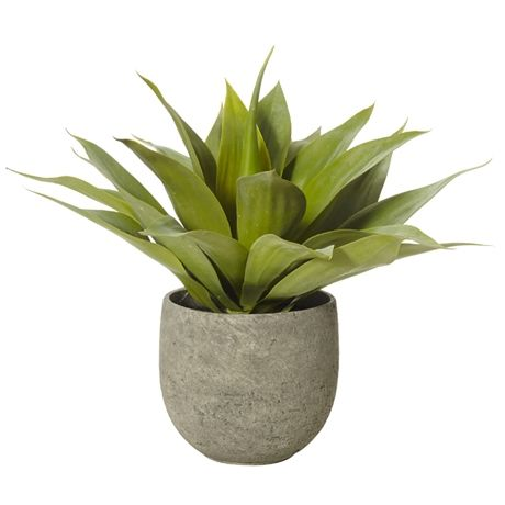 Foliage Agave In Tub Pot 48cm   Freedom Furniture and Homewares