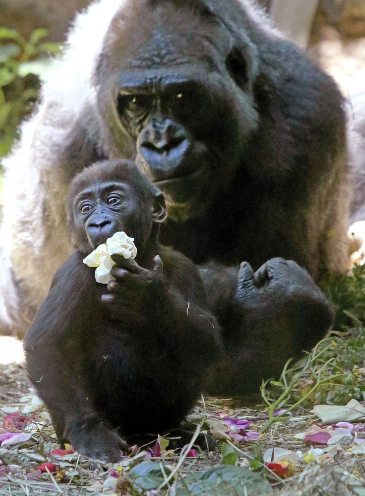 1479 best Animals I LOVE images – Seattle Times Birth Announcements