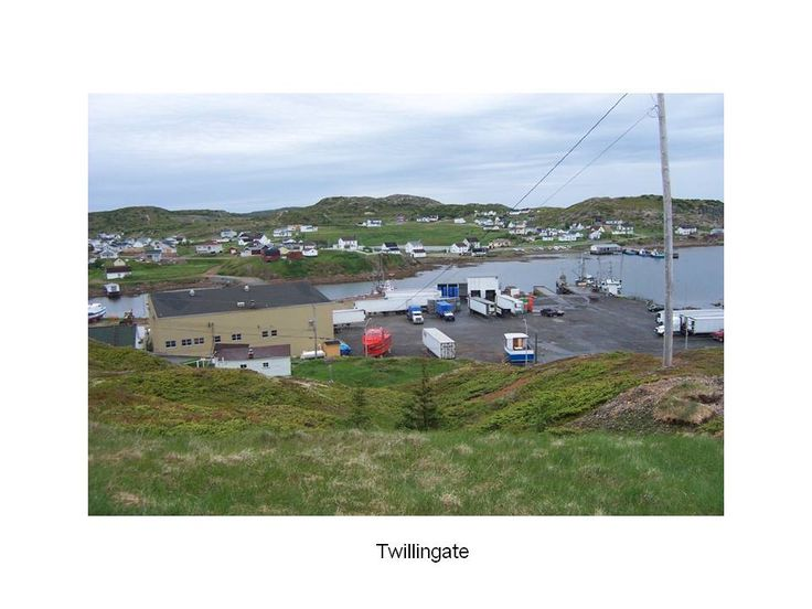Twillingate: on sale at the fish shop; squid, seal flippers, cod's cheeks, cod's tongue, smelt, herring, monk fish cheeks, calpin (sprats)