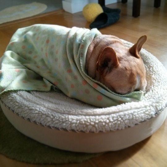 Kaiju Monkey: The Monster Chronicles of a Sleepy French Bulldog.: