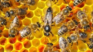 Article: Queen bees: Do women hinder the progress of other women?  By Reality Check teamBBC News  4 January 201    Pic: A queen bee surrounded by smaller worker bees
