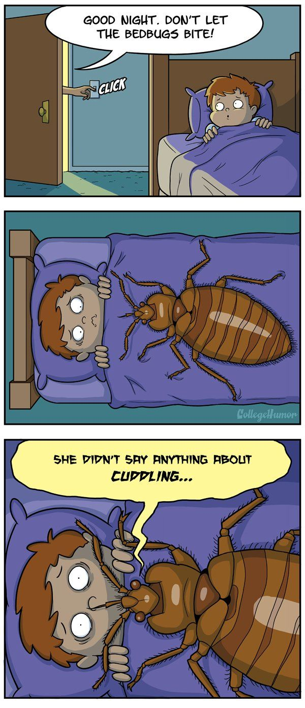 1000 images about bug funnies on pinterest roaches the fly and