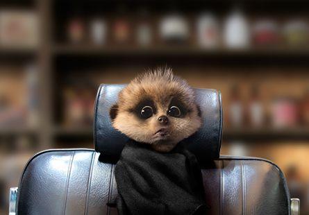 Oleg's Diary: Blog Updates From Baby Oleg   Compare the Meerkat first furcut