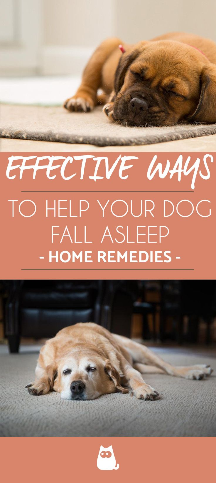 How to Get a Dog to Sleep Tips and Home Remedies Dogs