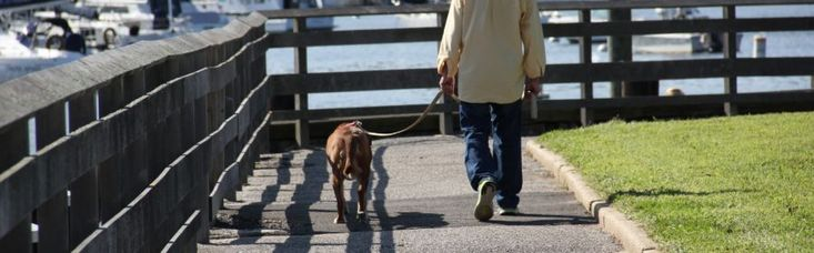 6 Safety Precautions to Take when Walking Your Pup : http://www.sittingforacause.com/blog/pet-care/6-safety-precautions-to-take-when-walking-your-pup/