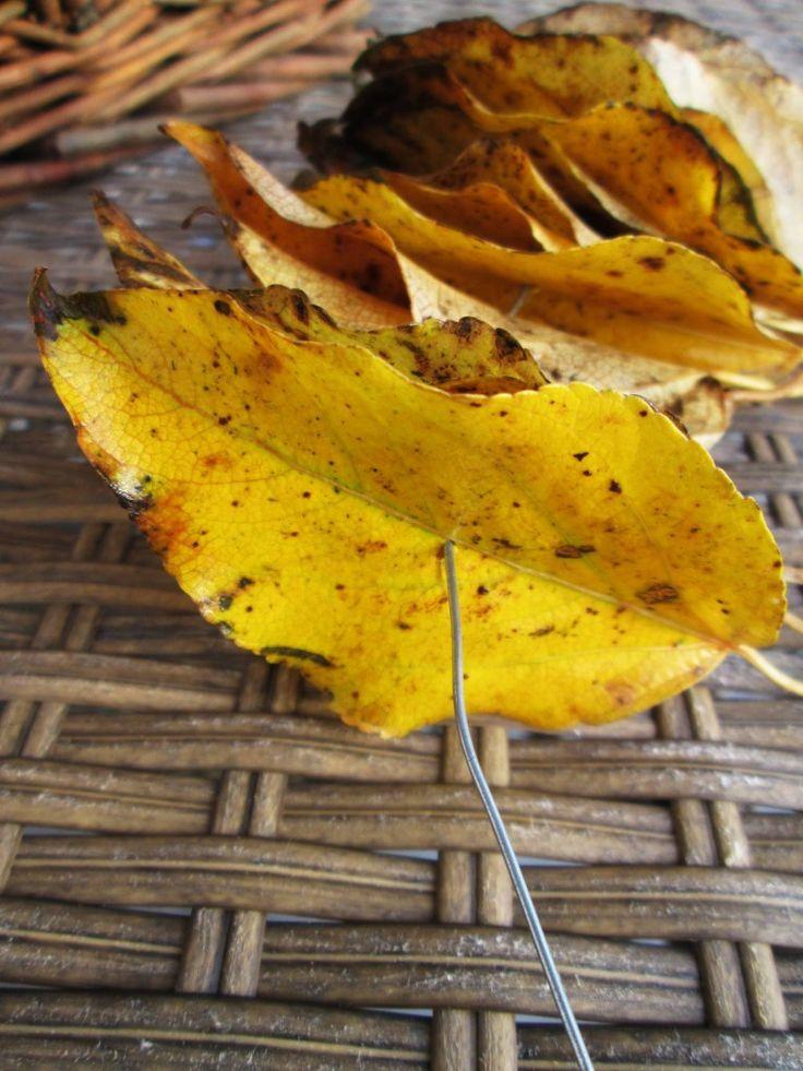 For å lage en enkel krans trenger du mange høstblader i fine farger. Bladene kan du finne i hagen, langs en vei, eller i en park. Barna kan lage denne!