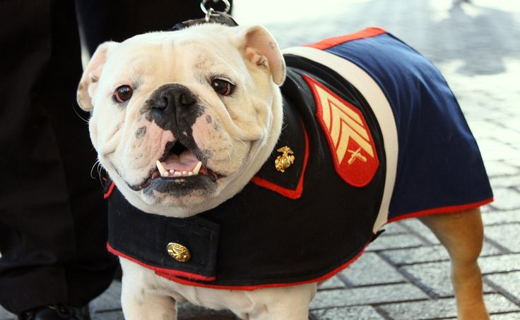 We fell in love with the US Marine Corps mascot.  He is so well loved, and serves his country proudly!