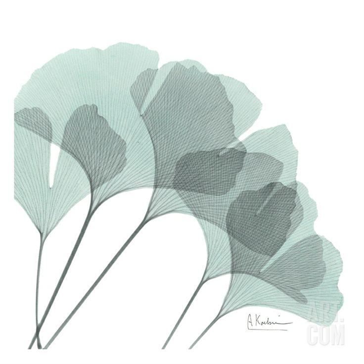 Ginkgo in Pale Blue II • Albert Koetsier