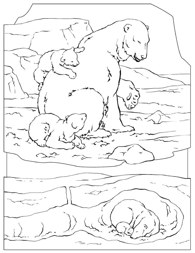 national geographic animal coloring pages 6