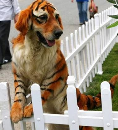 okay, so now i want to throw a halloween party so i can paint Hoss like this.  think he's sit still?  he'd probably run straight to the creek when i was finished.