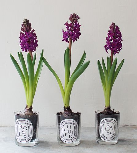 how to plant flowering spring bulbs // good use for used candle jars