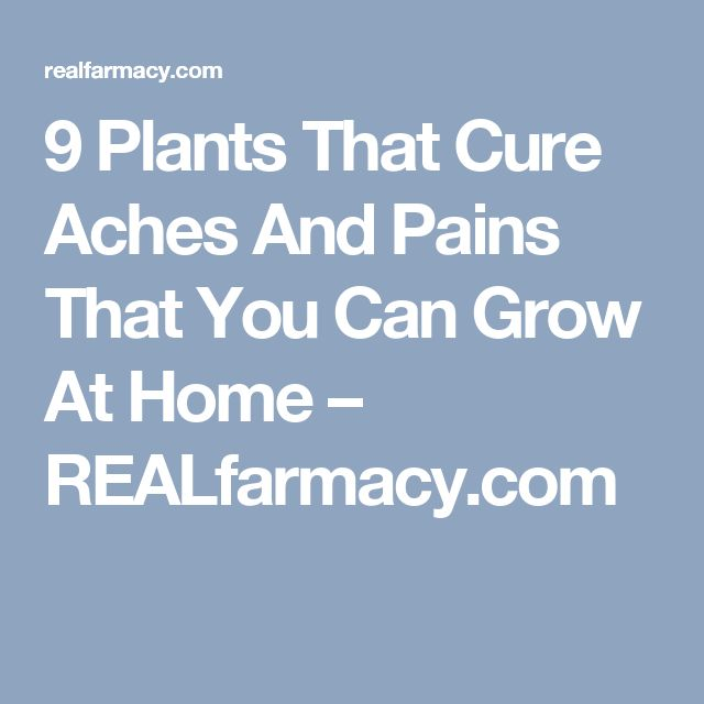 9 Plants That Cure Aches And Pains That You Can Grow At Home – REALfarmacy.com