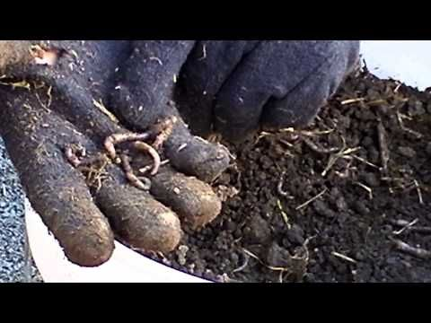 how to raise your own worms