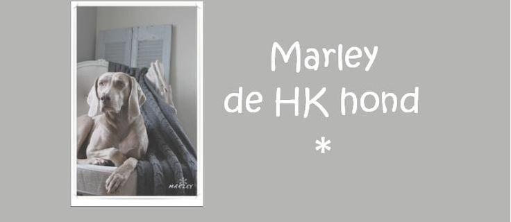 Marley de HK hond | Krijtverf pootjes Deze week was het te koud om in de schuur te werken. Ik heb mijn meubeltjes in de kamer neer gezet om daar lekker te gaan schilderen. Dat heb ik geweten! Moos en Marley lagen lekker op hun kussen te slapen, maar Wickie had andere plannen.