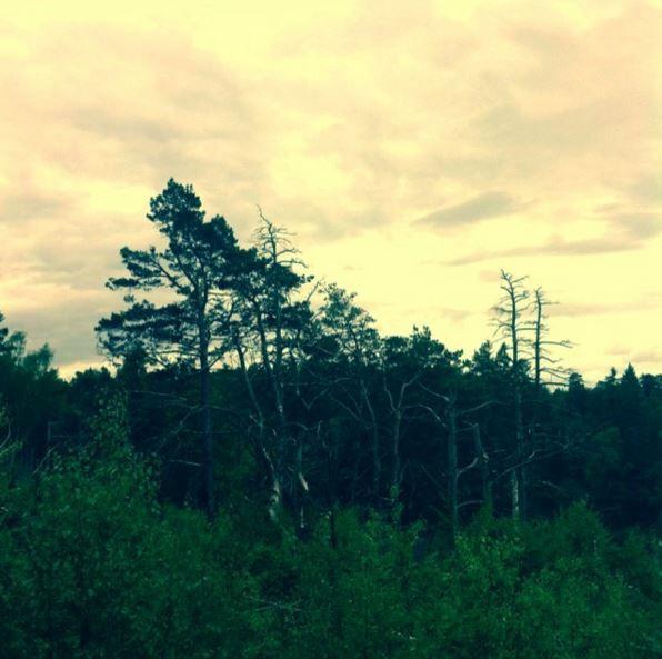 -Yellow trees- Linnea Kruslock